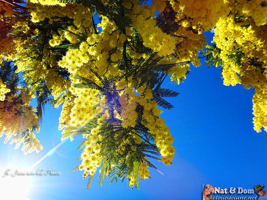 L'or des Mimosas, Nat et Dom de passage en France
