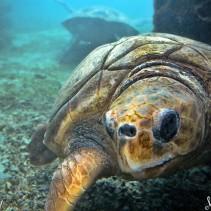 Saint Leu, Kelonia, des tortues au petit soin