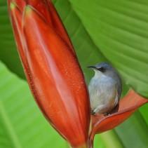 Les couleurs de la Réunion