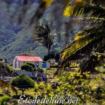 Rodrigues, côté champs