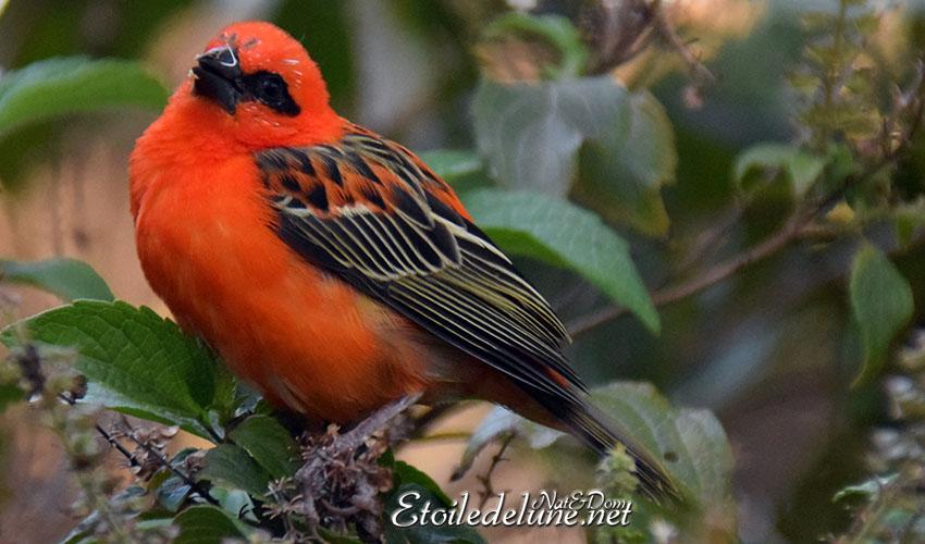 Un Foudi nommé cardinal
