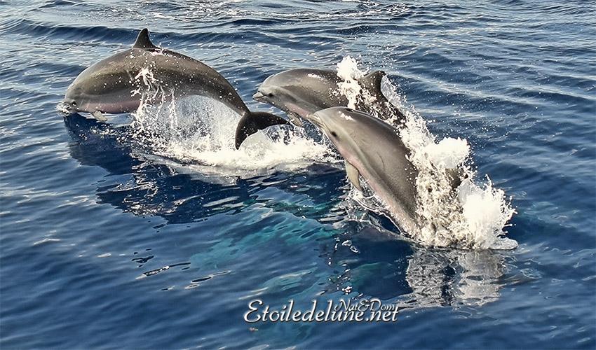 C'est fou! Les dauphins des Grenadines…