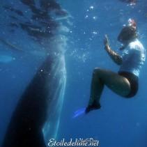 Requins-baleines de Oslob, baignade inoubliable