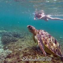 Apo Island, l'île aux tortues