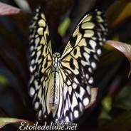 Des Princes aux ailes fragiles (Siquijor)