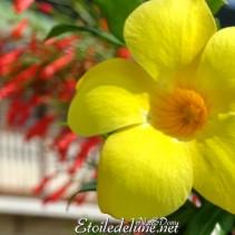 Madinina, «my island home»