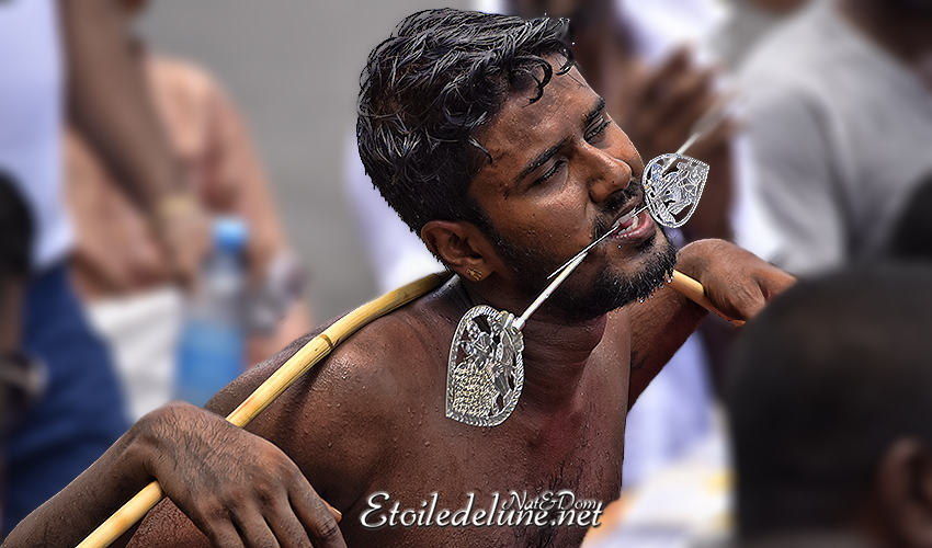 «Thaipoosam Cavadee», une cérémonie qui ne manque pas de piquant !