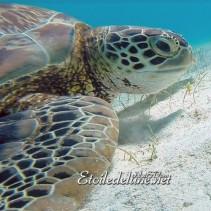 Trop heureuses aux Grenadines : nos amies les tortues