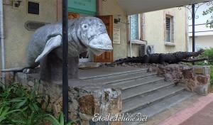Lamantin et crocodile des Seychelles