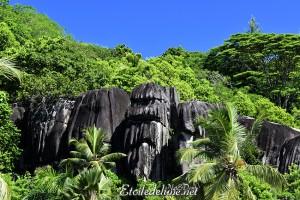 Le takamaka colonise les pentes rocheuses