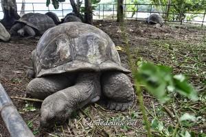 Enclos des tortues trop petit