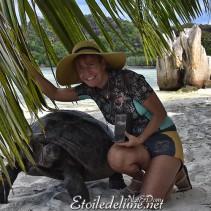 Des Amours de tortues à Curieuse (Seychelles)