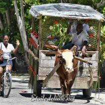 La Digue, premières impressions (Seychelles)