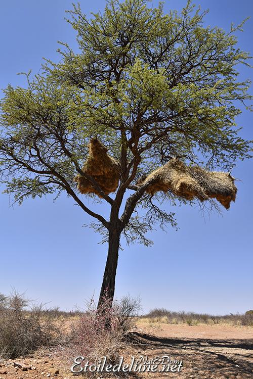 Namibie_ republicains sociaux (2)