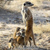 Ecoutez la savane… Elle vous parle (Kgalagadi TP)