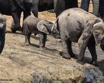 Addo Elephant Camp South Africa_NAT4899