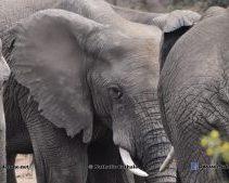 Addo Elephant Camp_ South Africa_NAT4386