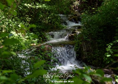 Cascade - foret - forest - water fall