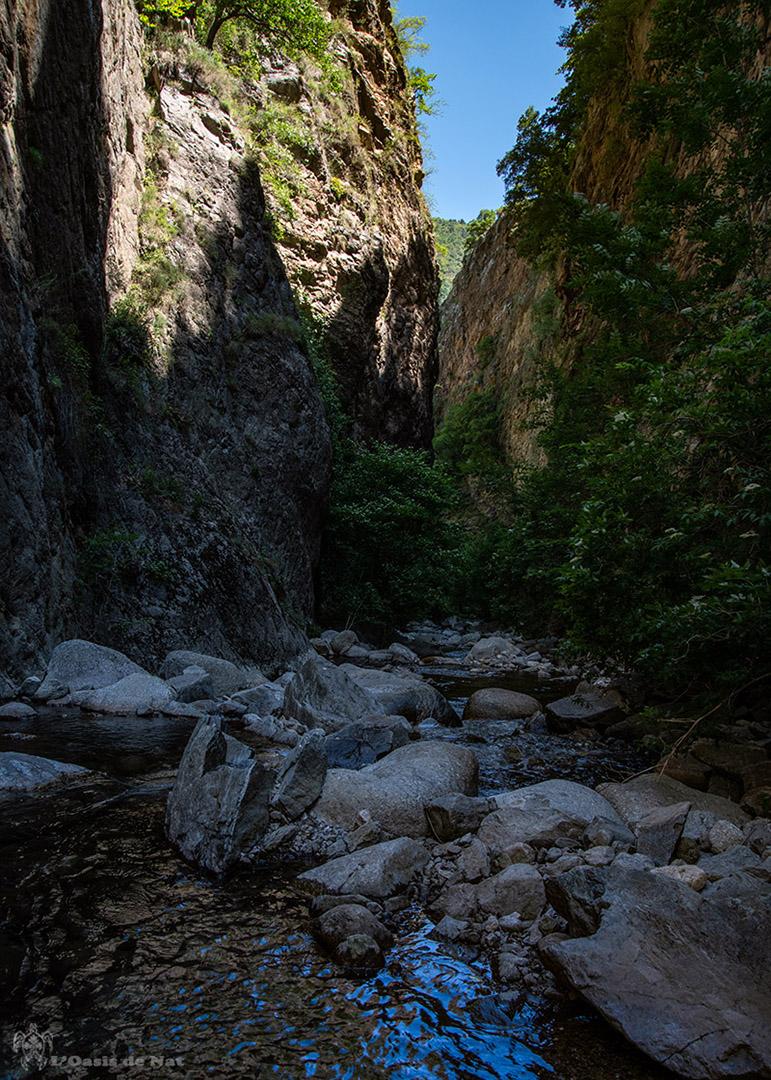 Gorges de la Carança - rivière - forêt - Pyrénées orientales