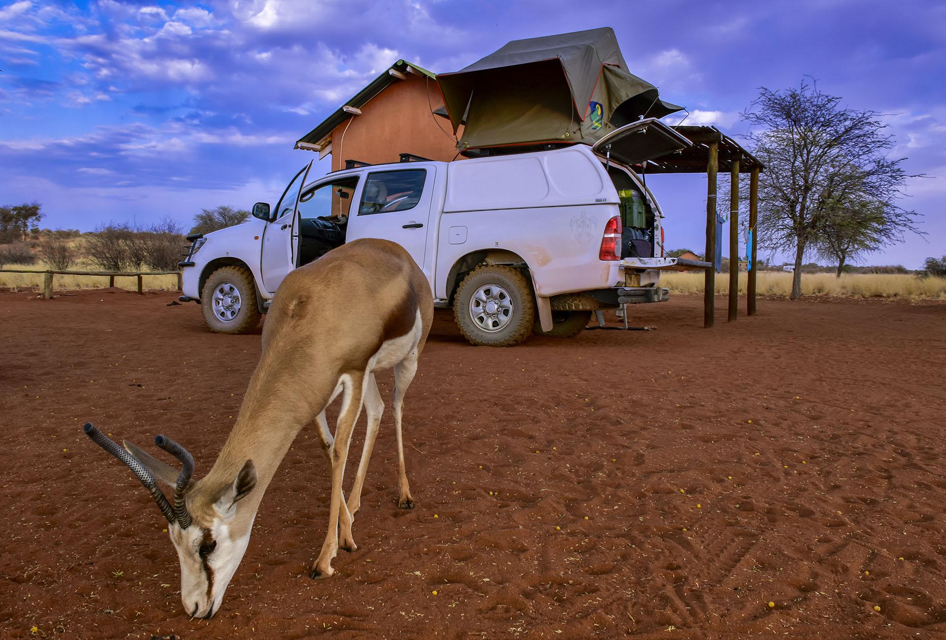 Namibie, safari, désert, animaux, campement