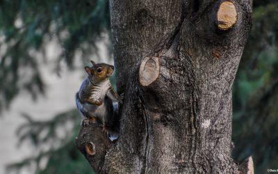 La jolie leçon de l'écureuil confiant et bienveillant