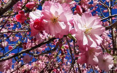 Que c'est bon de vivre … le printemps !