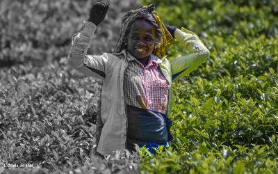 Sourires doux et Thés amers, hommage aux Picking Ladies